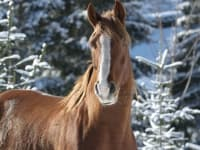 Wintervergügen für die Pferde