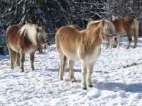 Unsere Pferde fühlen sich wohl