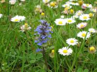 unsre Blumenwiese