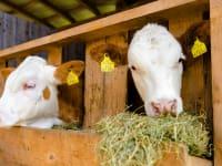 Bei uns am Bauernhof , sie sind herzlich willkommen