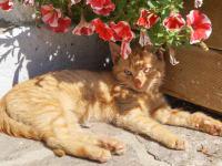 Katze nimmt Sonnenbad