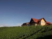 Weingut Muster - inmitten von Weinhängen gelegen