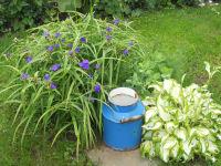 Blumen im Hof