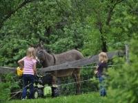 Emily und Valerie bei den Eseln