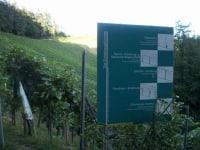 der Weingarten lädt ein