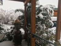 weiße Winterpracht