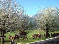 Ferienwohnung Menthof_Küche unter Kirschbäume