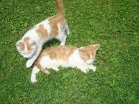 Tomi und Luki
