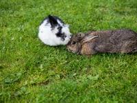 unsere spielende Kaninchen