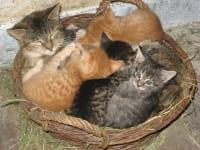 Katzenmuttertag