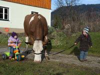 Gregor mit seiner Kuh - Kufstein
