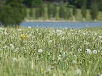 Sich wieder finden inmitten idyllischer Naturlandschaft mit Wiesen, Wald und See