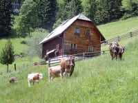 Die Plankenhütte