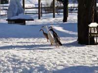 Im Wintereinsatz unsere Enten