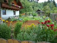 Der Kräutergarten in voller Blüte