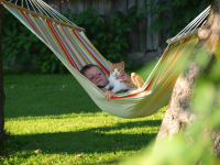 Nicht nur Kinder und Katzen genießen die Hängematte