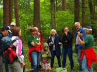 Kräuterwandung Wald