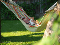 Hängenmatte, Kind, Katze