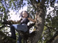 Am Apfelbaum