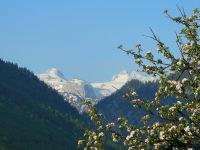 Dachstein mit blühenden Apfelbaum