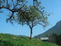 Jagdhüttl mit Baum