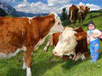 Die Kühe lassen sich nicht stören