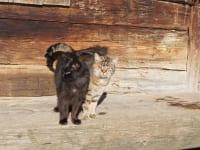 zwei Schmusekatzen