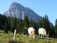 Kühe auf der Almweide