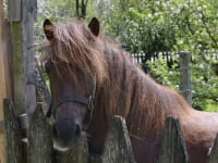 unser Pony Beauty