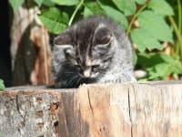 Katze am Stock