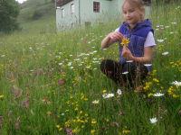 Blütenpracht vor der Haustüre