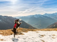 Urlaub mit Hund - kein Problem am Bergbauernhof Irxner