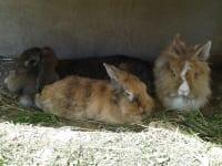Unsere Hasen Trixi, Wendy & Adi