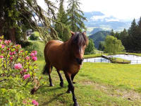 Unser Pferd am Teich