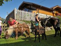 Pflege der Ponys