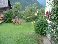 Pony und Henne