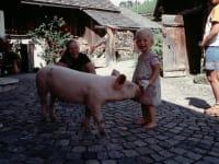 unser Hausschweinchen
