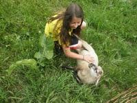 Lilly das Schaf