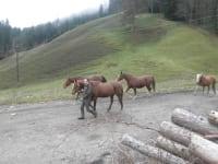 Pferde mit Manfred