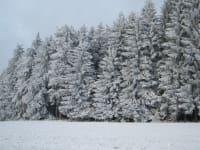 Die Waldheimt im Winterkleid