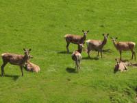 Wildgehege am Bauernhof, Bauernhof Rossegger, Waldheimat