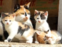 Minka mit Babys