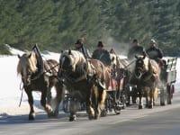 Genießen Sie eine Fahrt per Kutsche oder Schlitten mit gutmütigen Haflinger Pferden. Für romantische Stunden auch abends möglich!
