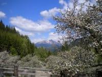 Der Greim im Frühling