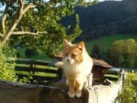 Katz und Maus gehören auch zum Bauernhaus