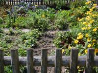 Der Hausgarten - Kräuter und Gemüse warten auf Sie