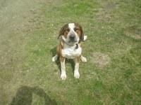 Unser Hofhund Rocky