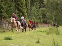 Nicht nur uns Menschen macht das Spaß - auch die Pferde genießen ihre Freiheit.