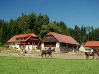 Herzlich Willkommen am Steinerhof
