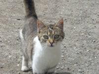 unsere Katze